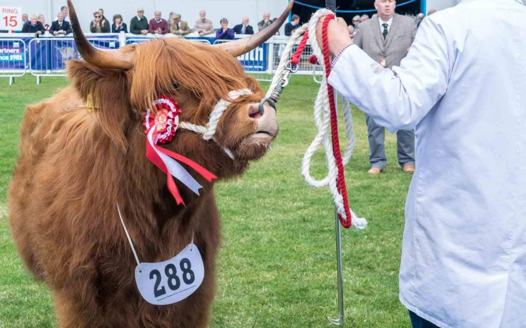 Royal Highland Show, Edinburgh, June 2018